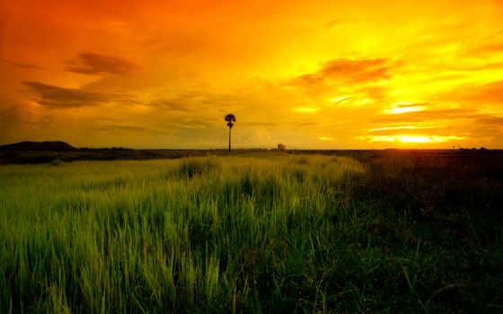 саванна, zakat, дерево, вечер, трава, slon, даль, ораньжевый,