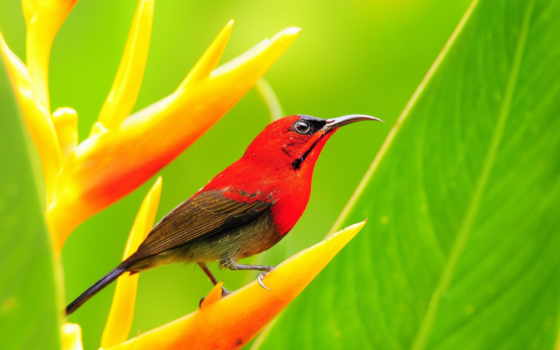 birds, животные, картинка,