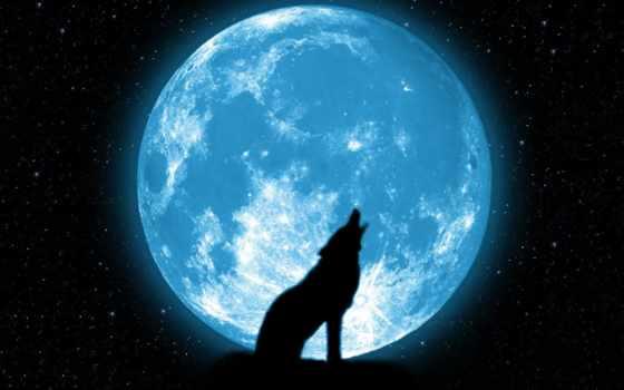 волк, луна, луну