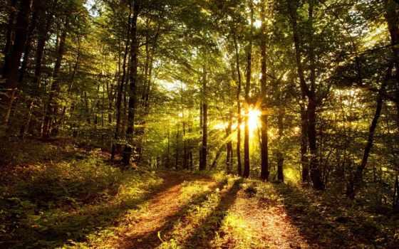 лес, trees, тропинка