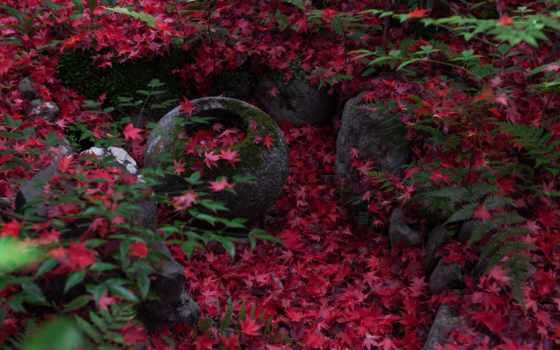осень, природа, japanese, листва, maple, kyoto,