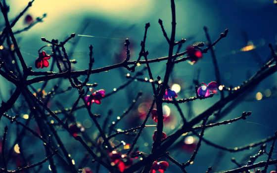 макро, cvety, боке, красные, листва, цветочки, голых, trees, ветках, розовый,
