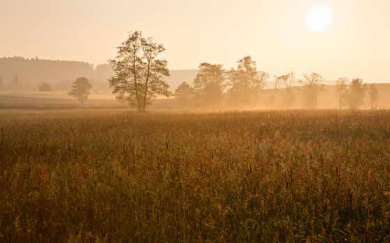 поле, утро, рассвет, дымка, rays, туман, sun, солнечные, трава, солнышко,