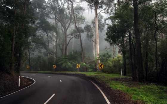 дорога, лес, поворот, trees, проходящая, сквозь, разных, разрешениях,