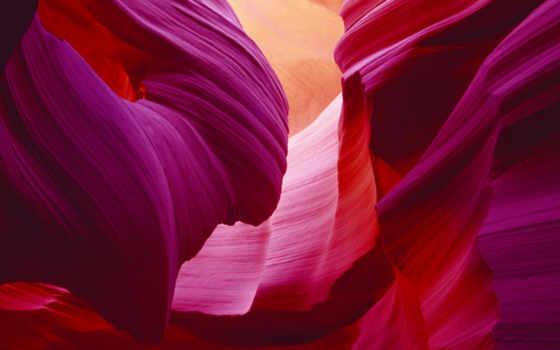 best, pack, canyon, arizona, antelope, цветы,