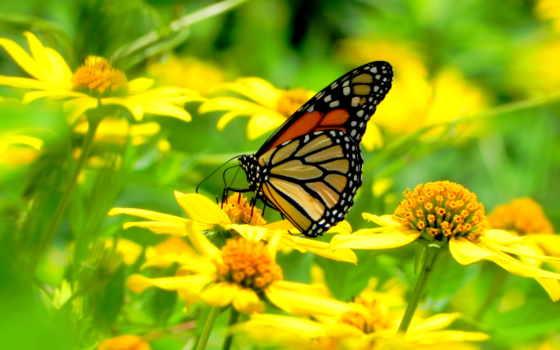 цветы, бабочка, макро, сидит, цветах, бабочки, разных,