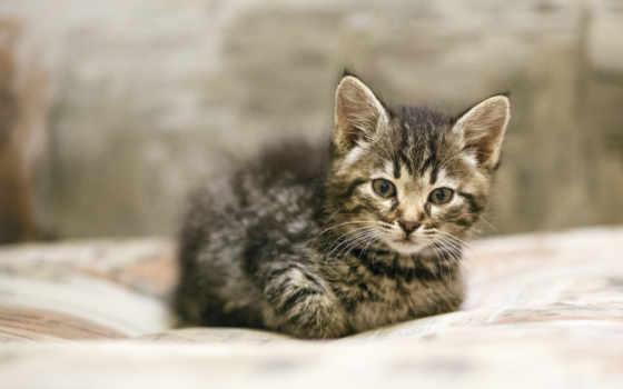 small, котенок, zhivotnye