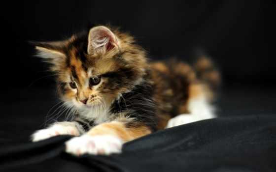 кошки, марта, кошка