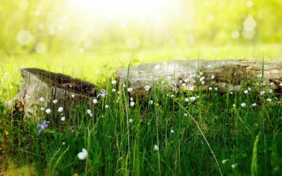 природа, цветы, summer, трава, свет, stump, log, боке, koshkina, лариса,