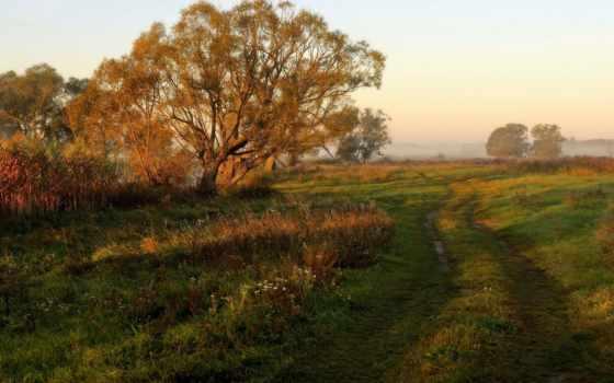 дорога, никогда, утро, траве, накатанная, sayı, природа,