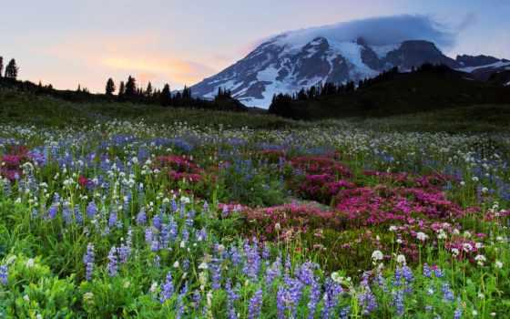 свет, рай, гора, mountains, закат, зелёный, ocean, trees,