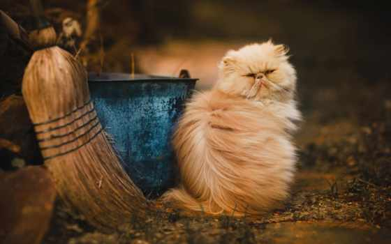 коты, сегодня, upgrade, кот,