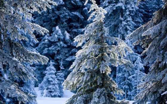 winter, анимации, снег, лес, кб, gif, gorgeous,