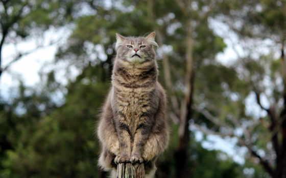 кот, меня, тебя