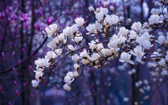 primavera, йога, весна, carte, desktop, verset, avec,