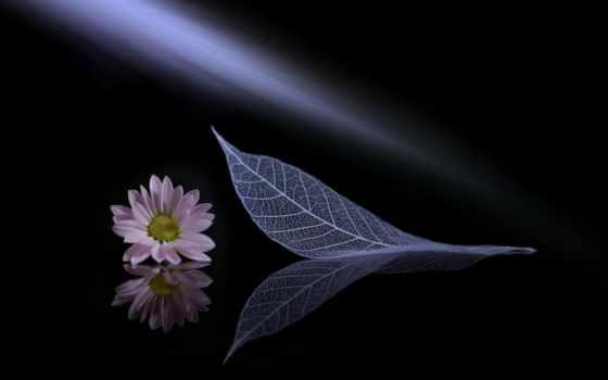 зелёный, фон, цветы, leaf, cvety, widescreen, текстура