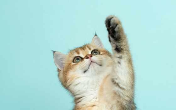 кот, cute, funny, котенок, freetoedit, standard, replay, baby