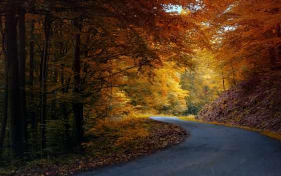 осень, природа, дорога