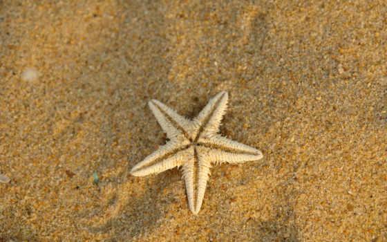 песок, море, купить