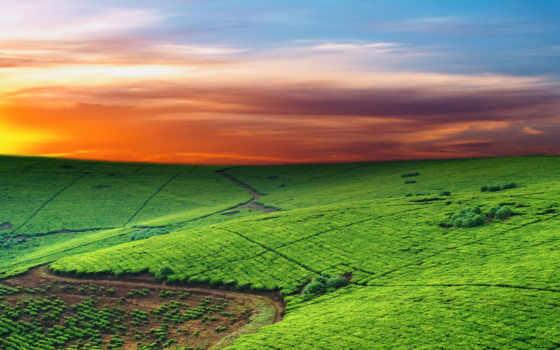 поля, поле, вид, линии, сверху, культура, пейзажи -, oblaka, избранные, горизонт, небо,