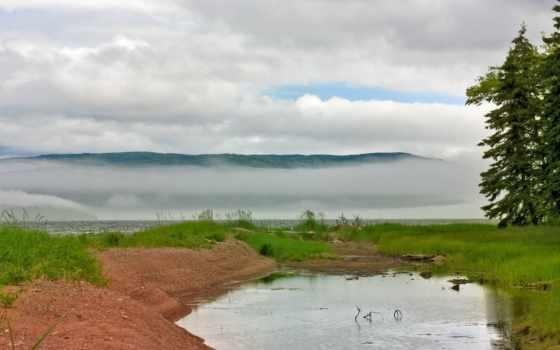 лес, пруд, лужа, туман, trees, река, freepik, природа, cabot, самогоне,
