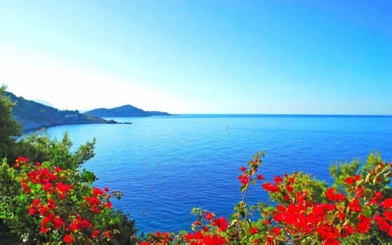 море, cvety, берег