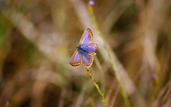 nokia, бабочка, изображение, фото, resolution, совершенно, high,