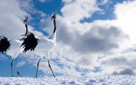 лунно, родное, crane, japanese, любимое, старое, zhivotnye, путь,