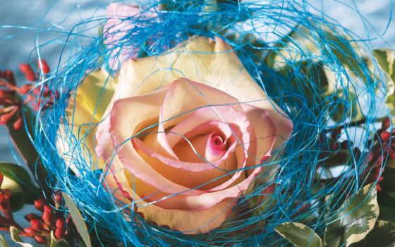 wallpaper, роза, скачать, www, цветов, flowers, днем, pl, masatapet, yassir, люблю, general,