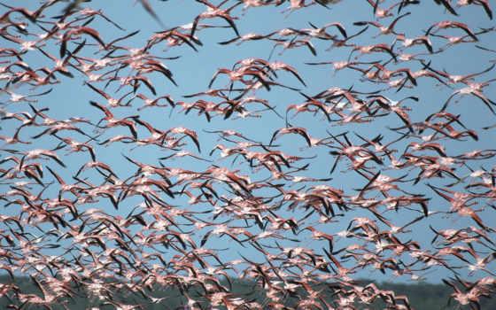 птиц, стая, птицы, celestun, flock, ria, biosphere, celestún, greater, reserve, flamingos, ría, reserva, mexico, фламинго, flamencos,