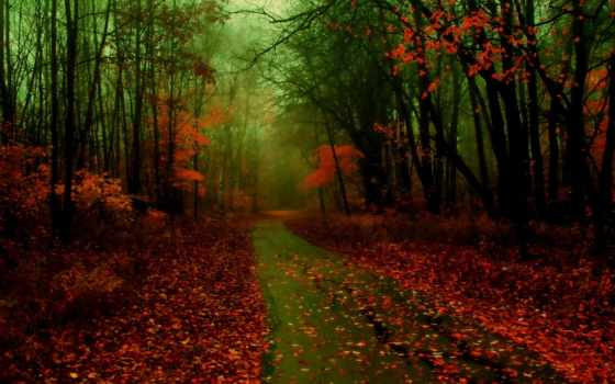 осень, лес, дорога, картинку, дороги, добавил, балла, изображение, листья, туман, природа,