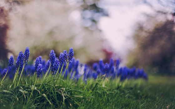 цветы, другие, трава