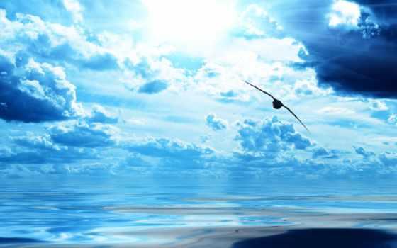 птица, небо, море