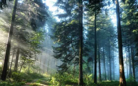 дорога, лес, природа