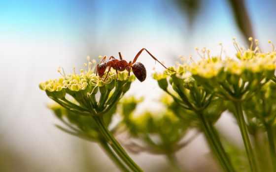 ant, красивые