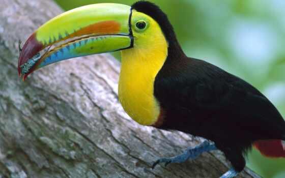 птица, клювом, большим, черная, птицы, рейтинг, голосов,