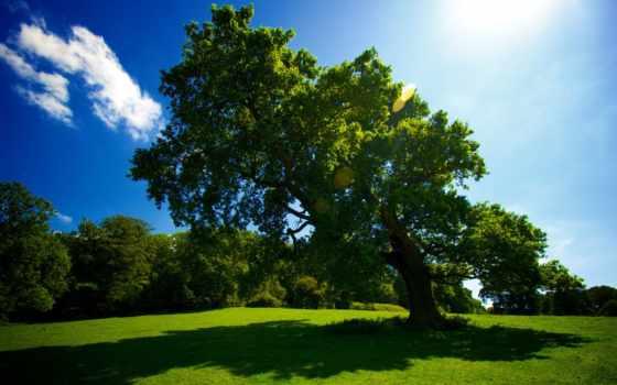 дерево, shadow, природа, park, trees, небо, sun, осень,