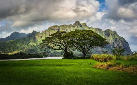 hawaii, природа, landscape, oahu, небо, трава, дерево, ведьмак, oblaka,