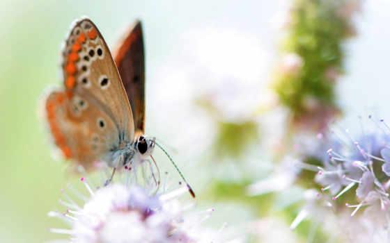 бабочка, cvety, info, смотреть, için,