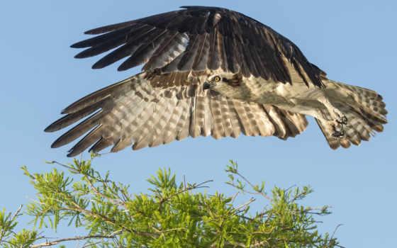 фото, you, можно, stock, птички, pani, falcon,