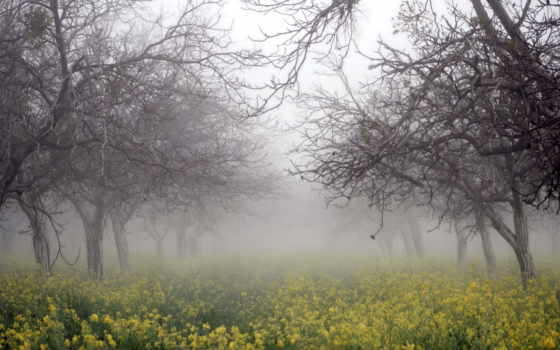 рапс, деревья