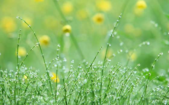cvety, поляна, pack, подборка, web, полевые, девушек, красивых, дикие,
