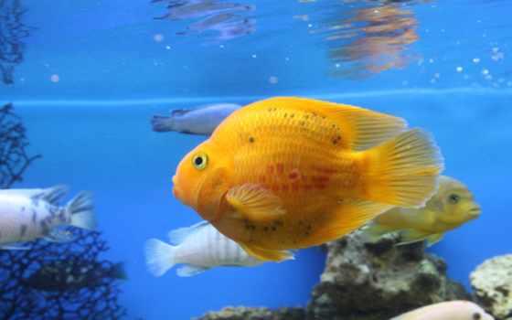 попугай, fish, аквариум