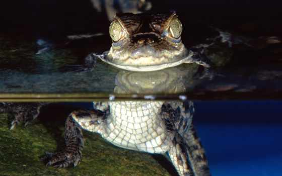 small, крокодил, вопрос