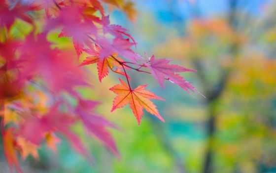 осень, тона, япония
