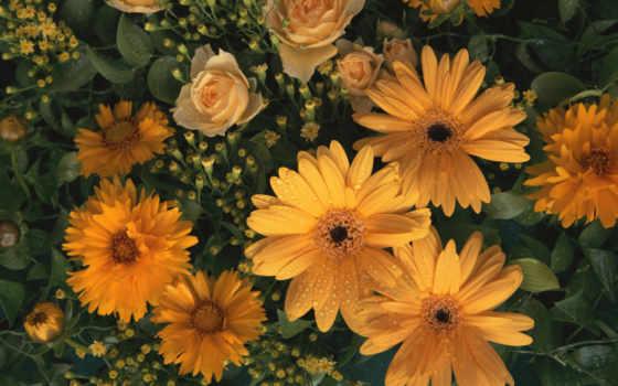 free, цветы, ey