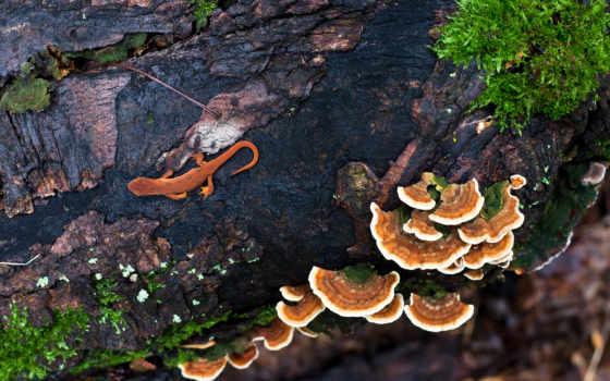 ди, corteccia, albero, sfondi, muschio, tritone, грибы, lucertola, immagini, ящер,