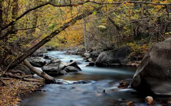 красивых, home, фотографий, подборке, красавица, лесу, качественной, reki, galeria,