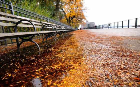 пасть, город, new, york, park, осень, листья, скамейка,