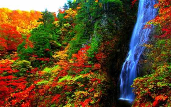 otoño, pin, лес, bosque, cascada, cascadas, осень, amazing,